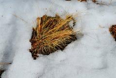 Engazonnez les branches tournant le vert au printemps, parmi la neige photographie stock