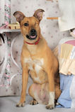 Enögd hund Royaltyfri Foto