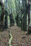 Enge bomen op Zwolle-gebied Stock Fotografie