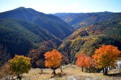 Enge de herfstbos en hemel Stock Afbeelding