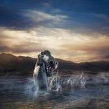 Enge Loch Ness Monster die uit water te voorschijn komen stock afbeeldingen