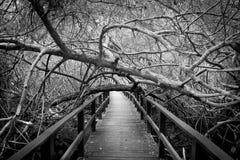 Enge weg in een bos Stock Fotografie