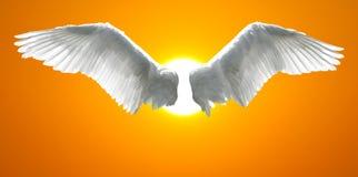 Engel beflügelt mit dem Hintergrund, der vom Sonnenunterganghimmel gemacht wird stockfotografie