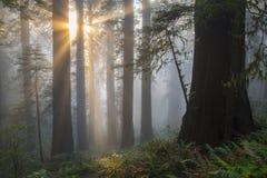 Engelachtig-als zonnestralen stock fotografie