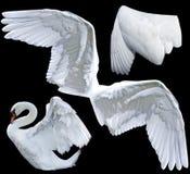 Engelachtige vleugels Stock Afbeeldingen