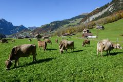 Rural landscape at the village of Engelberg on Switzerland Stock Image