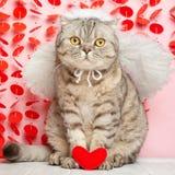 Engelenkat, met bogen en pijlen en harten in poten Conceptie van liefde en de Dag van Valentine royalty-vrije stock foto