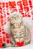 Engelenkat, met bogen en pijlen en harten in poten Conceptie van liefde en de Dag van Valentine stock afbeeldingen