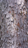 Engelmann spruce bark Stock Images