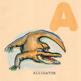 Engels alfabet, Alligator stock illustratie