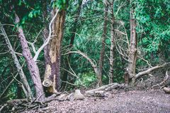 Engels Bospark met Stil Weergeven van Groen gebladerte stock afbeeldingen