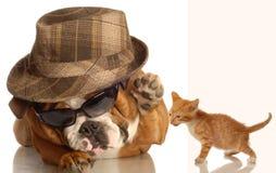 Engels buldog en katje Stock Foto