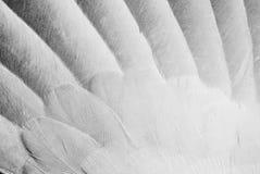 Engels-Flügel Stockfotografie