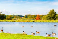 Engels landschap in de herfst Stock Foto's
