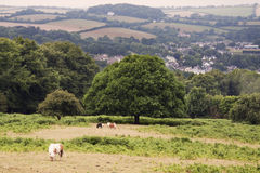 Engels platteland Stock Foto's