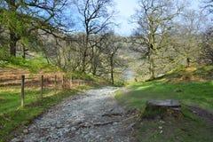 Engels platteland: bergopwaarts sleep, bos of park Stock Afbeelding