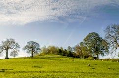 Engels platteland in de lente Stock Fotografie