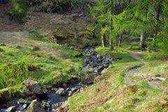 Engels platteland: rivier op bosopen plek Stock Foto