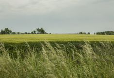 Engels platteland - weiden en hemel royalty-vrije stock afbeeldingen