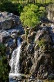 Engels Rocky Mountainous Scene met Bomen en Struiken en Waterval stock afbeeldingen