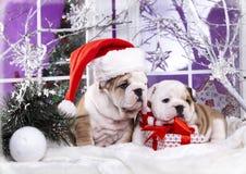 Engelse buldog die santa dragen stock foto's