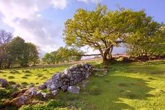 Engelse landschapsmening Stock Afbeeldingen