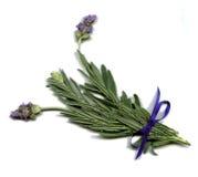 Engelse Lavendel Royalty-vrije Stock Fotografie