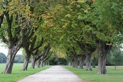 Engelse parkweg en bomen Stock Fotografie