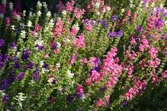 engelsk blommaträdgård för land Royaltyfri Fotografi
