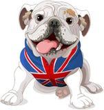 Engelsk bulldogg Royaltyfria Bilder