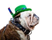 Engelsk bulldogg som bär Sts Patrick daghatten Royaltyfri Fotografi