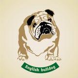 Engelsk bulldogg vektor Fotografering för Bildbyråer