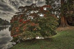 Engelsk höst i västra Sussex, Förenade kungariket royaltyfria foton