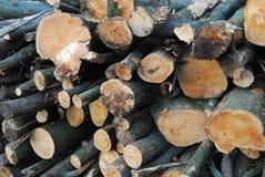 Engelsk höstlig skogsmark Arkivfoto