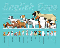 Engelsk illustration för vektor för tecknad film för uppsättning för hundkapplöpningformatjämförelse Arkivfoto