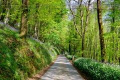 Engelsk landsgränd Royaltyfria Foton