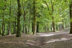 Engelsk skogsmark Arkivbild