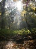 Engelsk skogsmark Arkivbilder