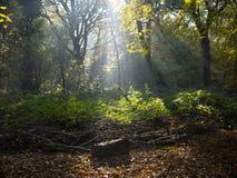 Engelsk skogsmark Fotografering för Bildbyråer