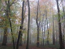 Engelsk skogsmark i höstmisten Royaltyfri Foto