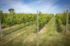 engelsk vingård Royaltyfri Bild