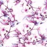 Engelska förgrena sig Lotus Background Branch With Pink Cherry Flowers Fotografering för Bildbyråer