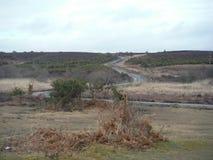 Engelska Heathlands Royaltyfri Fotografi