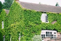 Engelska inhyser i murgröna Ett gammalt hus royaltyfri foto
