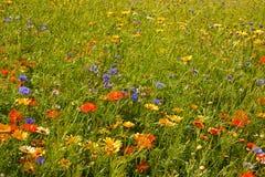 Engelska sommarblommor Fotografering för Bildbyråer