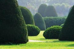 Engelskaträdgård Arkivbilder