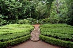 engelskaträdgård Arkivfoton