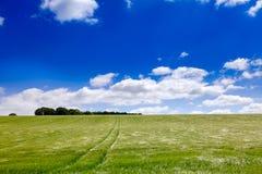 Engelskt lantligt landskap med kornfältet royaltyfri fotografi