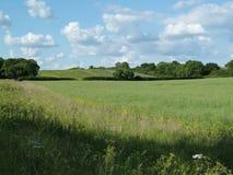 Engelskt vetefält (2) Arkivbilder