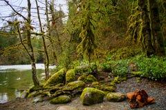 Engelsmanfloden faller lägre vattenfall i den Vancouver ön, F. KR. Royaltyfri Foto